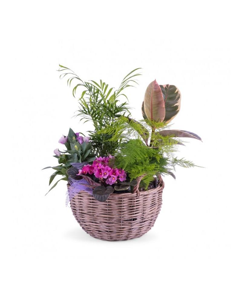 Cesta plantas Marta