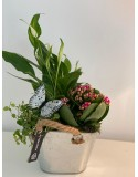 Cesta plantas Mariposa